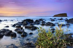 kieran-oconnor_lavender.jpg
