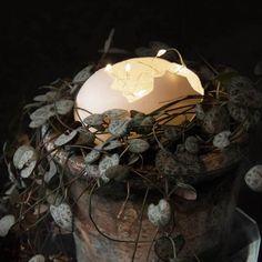 Dotty Home gifts & interiors Grapevine Wreath, Grape Vines, Christmas Lights, Wreaths, Fall, Home Decor, Christmas Fairy Lights, Autumn, Decoration Home