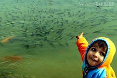 A boy points out a school of fish in the sarovar at Gurudwara Bangla Sahib in New Delhi. #India #photo