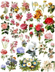 Flowers Collage Sheet - Digital Scrapbook - Scrapbooking - Decoupage Download Images - Vintage - Printables - Blossom Paper Art