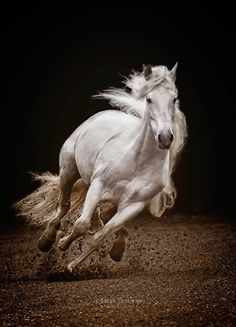 By Sarah Zentjens‎ Most Beautiful Horses, All The Pretty Horses, Animals Beautiful, Painted Horses, Cute Horses, Horse Love, Animals And Pets, Cute Animals, Horse Wallpaper