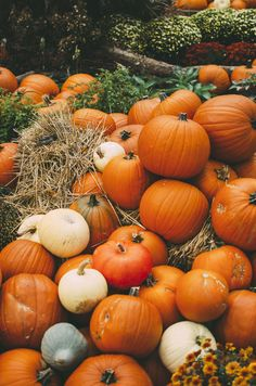 Find images and videos about autumn and pumpkin on We Heart It - the app to get lost in what you love. Autumn Photography, Love Photography, Halloween Photography, Halloween Season, Fall Halloween, Cute Fall Wallpaper, Fall Background, Autumn Cozy, Autumn Aesthetic