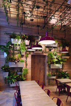 Space race - Top restaurant designs | Restaurant Business:
