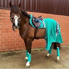 Das Pferd von @lillylin92 trägt das Eskadron Smaragdgreen Big Square mit der passenden Big Stripe Jersey und den passenden Bandagen #eskadron #otdhorseoutfiters