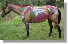 About Massage | Equine Dynamics - an equine massage therapy practice
