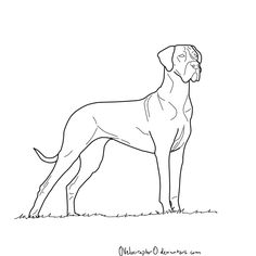 how to draw a great dane google search