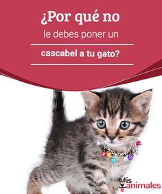 ¿Por qué no le debes poner un cascabel a tu gato?  El uso del cascabel en el gato está cada vez más condenado. Aquí te explicamos por qué no le debes poner un cascabel a tu gato.