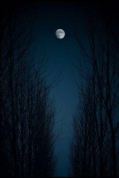 луна в ветвях