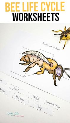 Honey bees are important to us and our food! Learn all about the honey bee and how they grow with these honey bee life cycle worksheets. Kindergarten Science Activities, Homeschool Science Curriculum, Science Experiments Kids, Homeschooling, Bug Activities, Elementary Science, Honey Bee Life Cycle, Worksheets For Kids, Printable Worksheets