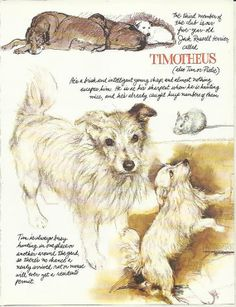 Dogs by Rien Poortvliet Abrams Publ.Inc 1983 page 32 (Poortvliet's dog Tim - a Jack Russell Terrier)