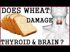 Does Wheat/Gluten Damage Thyroid & Brain? Dr Alan Goldhamer - WATCH VIDEO HERE -> http://bestcancer.solutions/does-wheatgluten-damage-thyroid-brain-dr-alan-goldhamer    *** gluten causes cancer ***   Is today's wheat, barley and rye products safe for us to eat? Should we avoid gluten? Are wheat and gluten dangerous for us? Can gluten cause autoimmune diseases? Can wheat cause hashimoto's thyroiditis? Does gluten attack the brain? Does wheat and...