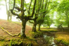 foret-espagneLa forêt d'Otzarreta
