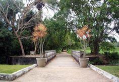 Jardim Botânico Bejamim Maranhão - Estado da Paraíba - Brazil