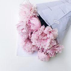 Instagram: moniaas_p  Flowers, peonies, inspiration