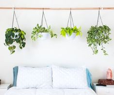 How do you water a living headboard? Very carefully. // Hanging Plant Headboard: 5 Steps (with Pictures)
