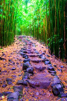 Bamboo forest - Hiking the Pīpīwai Trail Haleakala National Park Maui Hawaii Places Around The World, Oh The Places You'll Go, Places To Travel, Places To Visit, Around The Worlds, Hawaii Vacation, Hawaii Travel, Maui Hawaii, Hawaii Usa