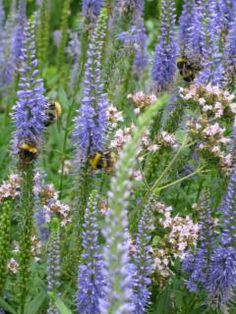 We are going from Beatles to Bees. Today we are pinning everything Bees.. hives, flowers, honey, jewelry, art, quotes... we need to honor and save our precious bees.