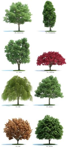 Deciduous: tress which shed leaves annually, as opposed to evergreens.