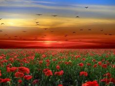 Stunning Poster Wall Art Landscape Flowers Poppies Sky Clouds x Remembrance Day Poems, Free Pictures, Free Images, Free Pics, Flower Landscape, Stonehenge, Sky And Clouds, Sunset Photos, Sunset Images