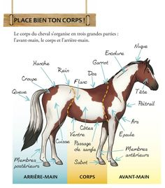 A collection of books on horseback riding: – Audrey Gessat Illustrator Une collection de li… - Best Equitation Horse Equestrian Boots, Equestrian Outfits, Equestrian Style, Equestrian Fashion, Types Of Horses, English Riding, Illustrator, Horseback Riding, Horse Riding