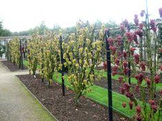 Easy Garden Design Ideas You Can Do Yourself - New ideas Fruit Garden, Edible Garden, Easy Garden, Tree Garden, Grape Trellis, Vine Trellis, Vertical Garden Design, Small Garden Design, Backyard Vineyard