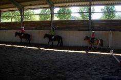 Pony, Animals, Green, Pony Horse, Animales, Animaux, Animal Memes, Animal, Ponies