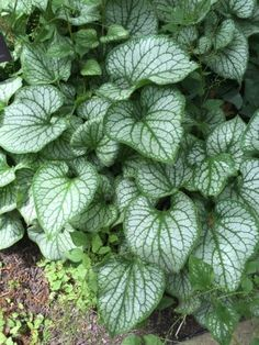 Zone 4 Shade Loving Plants: Best Shade Plants For Zone 4 Gardens - It can be hard finding plants that last through the winter in zone 4. It can be just as daunting finding plants that thrive in the shade. If you know where to look, however, your options for zone 4 shade gardening are pretty great. This article will help.