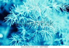 Find Beautiful Frosty Winter Leaves On Blured stock images in HD and millions of other royalty-free stock photos, illustrations and vectors in the Shutterstock collection. Thousands of new, high-quality pictures added every day. Winter Leaves, Christmas Ad, Photo Editing, Royalty Free Stock Photos, Illustration, Pictures, Image, Beautiful, Editing Photos