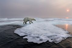"Seattle-based photographer Paul Souders recently won the ""Animals in Their Environment"" category in the prestigious Wildlife Photographer of the Year competition for his incredible image of a polar bear submerged in water"