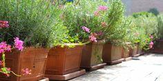terracotta + herbs