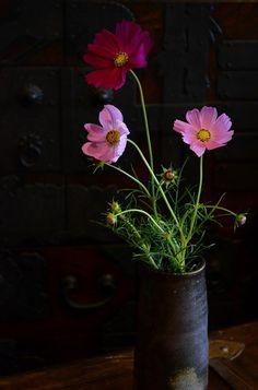 秋桜 | 備前焼わかくさブログ Japanese Pottery, Japanese Art, Traditional Japanese, Cosmos Flowers, Wild Flowers, Flower Art, Art Flowers, Beautiful Nature Wallpaper, Milky Way