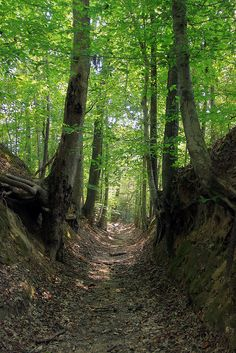 The Sunken Trace, Natchez Trace Mississippi...worn from years of travelers