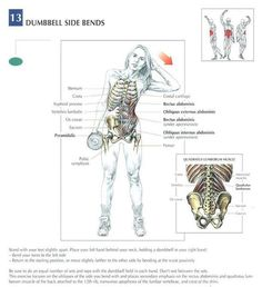 Dumbbell Side Bends ♦ #health #fitness #exercises #diagrams #body #muscles #gym #bodybuilding #abs #abdomen