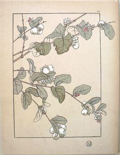 Jeannie Foord - Plate 39. Decorative Flower Studies. Paris: E. Greningaire, 1904. http://fineantiqueprints.com/Botanicalsearly20th/FoordJeannieArtNouveau