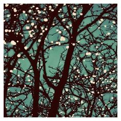 Tree Lights Photo, Night Lights, Nature Photography, Night Sky, Teal... ❤ liked on Polyvore featuring home, home decor, wall art, branch wall art, teal home accessories, turquoise wall art, teal blue home decor and branches home decor