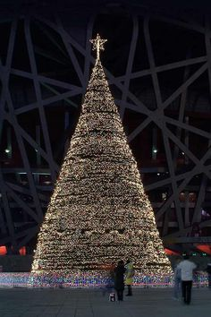 Beijing - Christmas trees with real bling