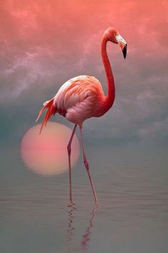 Okay this flamingo photo looks manipulated to me. Any thoughts?  Real bird photography with a sunset, or just some fancy photoshop?