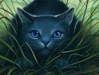 warrior cats bluestar - - Yahoo Canada Image Search Results