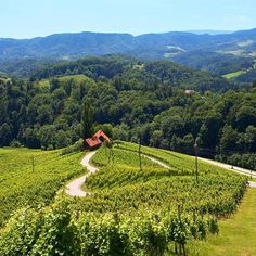 Slovenia is the only country with LOVE in its name, where even the roads are heart-shaped.💚 Have you seen this lovely road among the vineyards in Svečina?😍 Photo: Nea Culpa