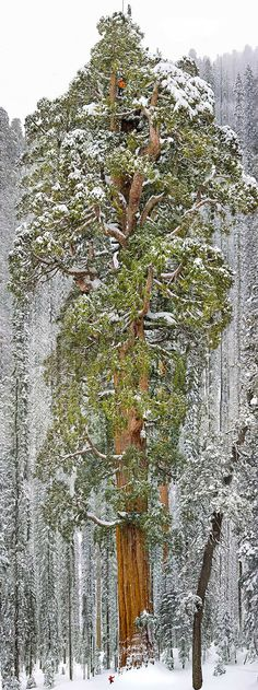 The World's MOST Stunningly Weird And Beautiful Trees. #15 Is Over 1500 YEARS Old!