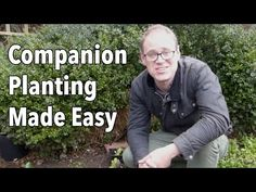 Companion Gardening Embedded thumbnail for Companion Planting Made Easy: See How To Do It - Find out which vegetables should and shouldn't be planted together with our companion planting chart for ten of the most popular vegetables. Companion Planting Guide, Types Of Herbs, Growing Tomatoes In Containers, Old Farmers Almanac, Garden Planner, Organic Gardening Tips, Sustainable Gardening, Easy Garden, Garden Ideas