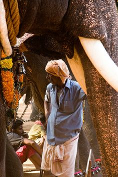 Elephant + Mahout, Thrissur, India