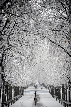 Snow covers the 'Pepiniere' park in Villers-les-Nancy, France