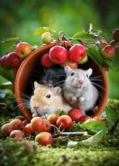 Happy Friday Hamsters in cup with apples Hamsters, Rodents, Cute Creatures, Beautiful Creatures, Animals Beautiful, Animals And Pets, Baby Animals, Funny Animals, Cute Mouse