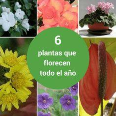 ¿Te gustaría tener plantas que florecen todo el año  Aprende cuáles son. 2f939416149