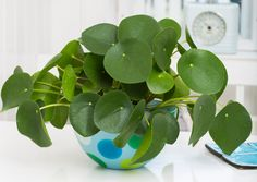 pilea peperomioides houseplants indoor plants plants decor home decor interior style plant corner nordic style scandinavian living vintage style urban jungle indoor jungle minimalist design boho decor gardening living room decor cute pots for plants
