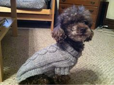 cable knit, dog sweater