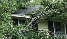 Before the next storm, learn how your homeowners insurance may help protect you if there's a downed tree.