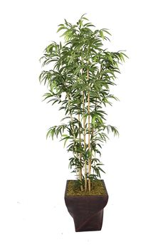 Laura Ashley 82 Inch Tall Natural Bamboo Tree in 17 Inch Fiberstone Planter * Read more  at the image link.