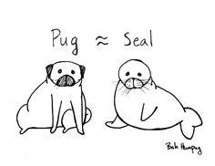 Pug and seal pup - see the similarities?
